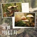 【少量】客製明信片/酷卡